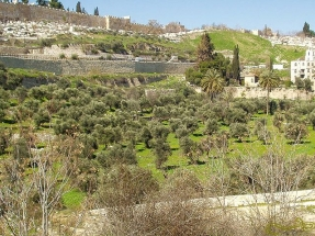 Olivová hora